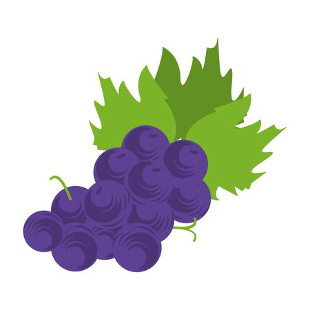 bunchs of grapes icon over white background, colorful design vector illustration 向量圖像