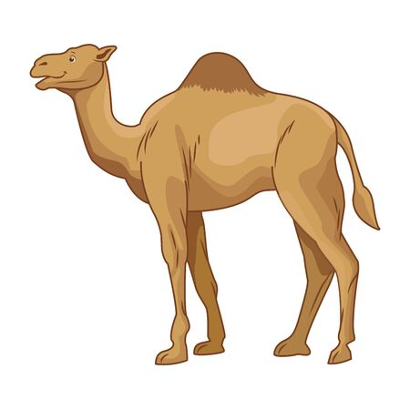 Camel desert animal cartoon side view vector illustration graphic design