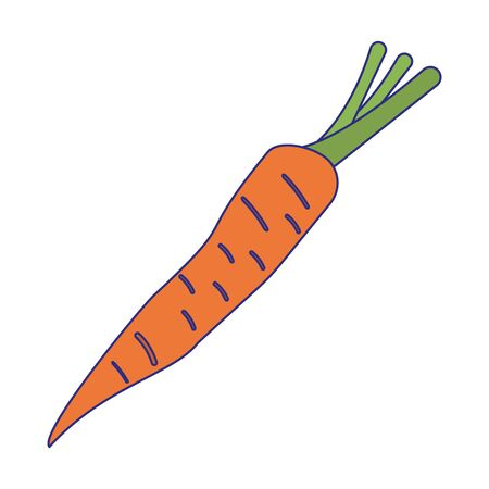 Carrot vegetable fresh food isolated vector illustration graphic design