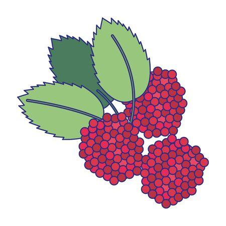 blackberries fruit fresh food isolated vector illustration graphic design