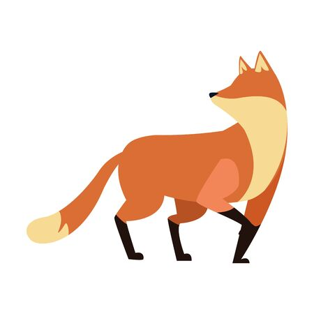 cartoon fox icon over white background, vector illustration