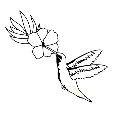 beautiful wild birds with exotic flower and hummingbird icon cartoon in black and white vector illustration graphic design