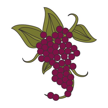 bunch of grapes and leaves icon over white background, vector illustration