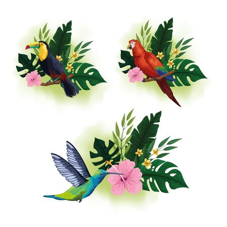 Exotic birds and tropical fauna set of colorful drawings vector illustration