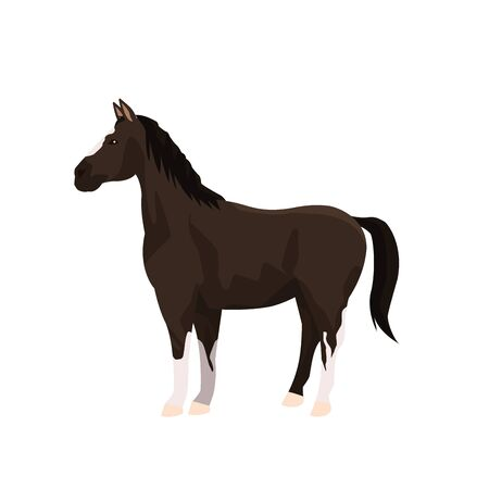 black horse icon over white background, vector illustration Illustration