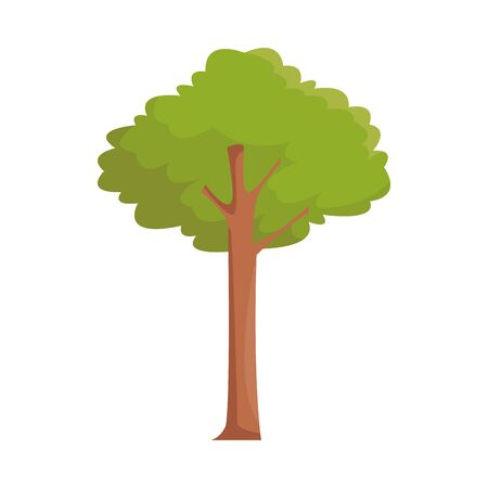 tree icon image over white background, vector illustration