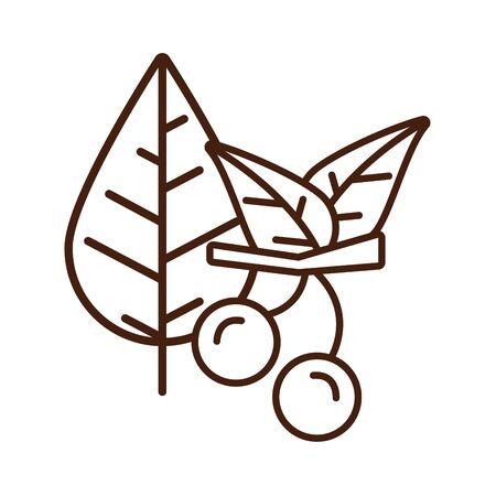 thanksgiving leafs plants autumn icon vector illustration design