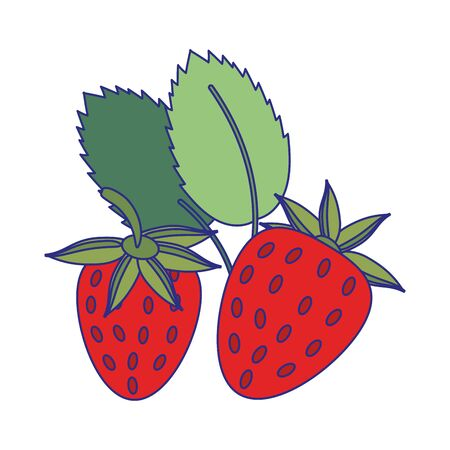 strawberries fruit fresh food isolated vector illustration graphic design