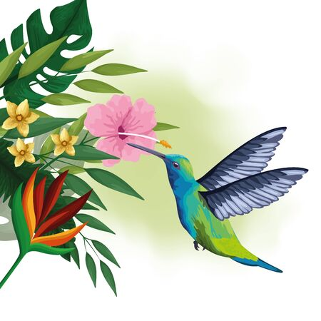 Exotic collibri extracting nectar from tropical flower, colorful drawing. vector illustration