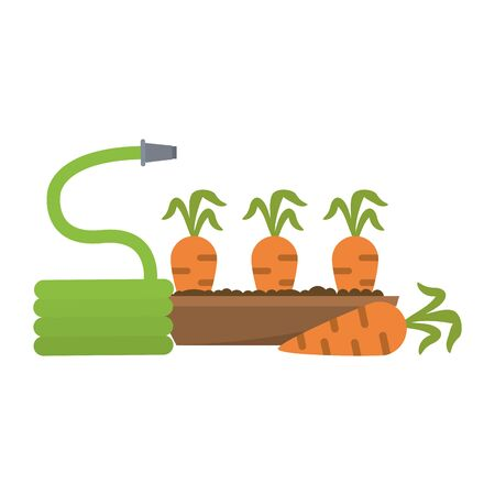 Garden with Carrots harvest and hose vector illustration graphic design
