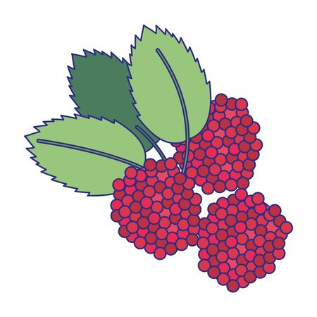 blackberries fruit fresh food isolated vector illustration graphic design