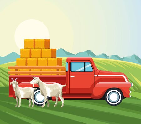 farming goats and pickup truck with bales of hay vector illustration