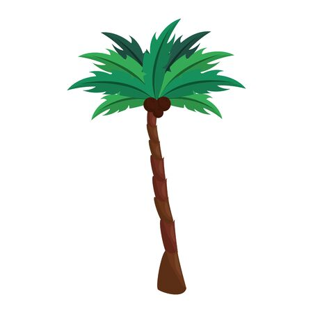 Palm with coconuts cartoon isolated vector illustration graphic design