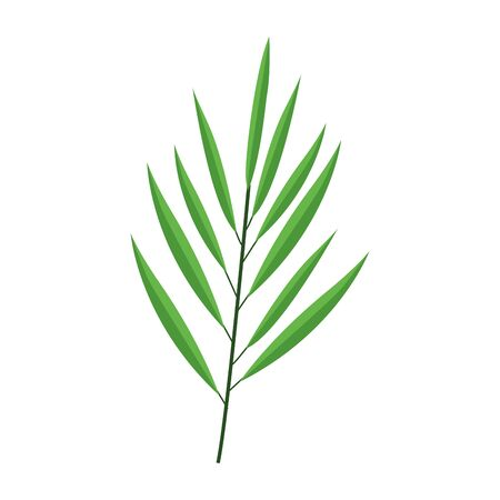 tropical leaf icon over white background, vector illustration 向量圖像