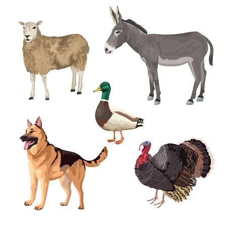 group of animals farm characters vector illustration design Illustration