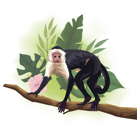 wild Capuchin monkey in tree branch scene vector illustration design