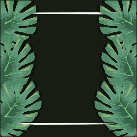 tropical leaves monstera palms decoration banner vector illustration