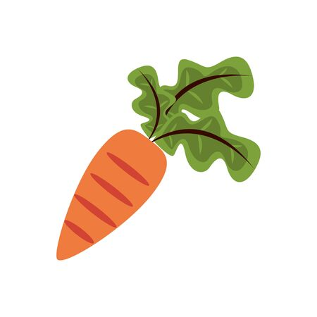 fresh carrot vegetable nature icon vector illustration design