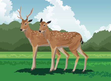 deers field tropical fauna and flora landscape vector illustration