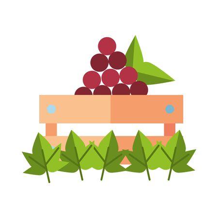 grapes fresh fruits in wooden basket vector illustration design