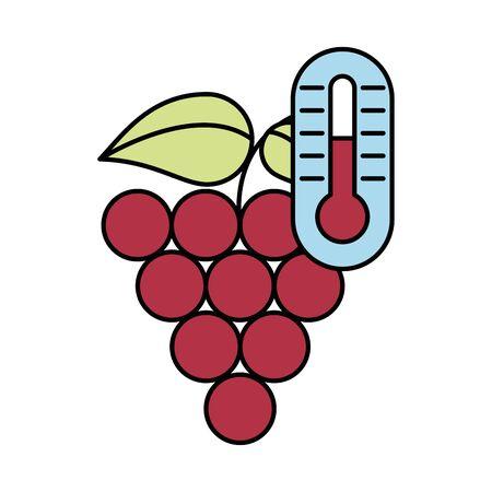 grapes fresh fruits isolated icon vector illustration design Иллюстрация