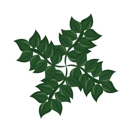 branch with ecology leafs foliage nature icon vector illustration design