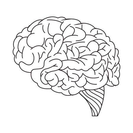 brain organ human isolated icon vector illustration design Illustration