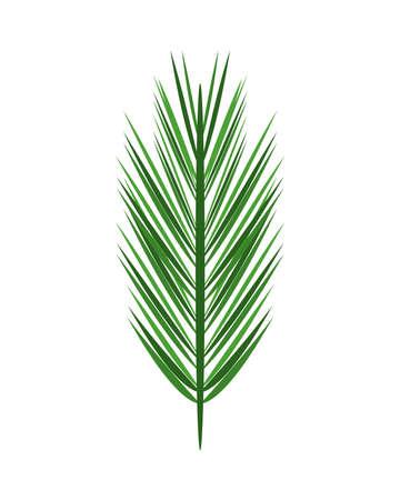tropical leaf palm summer icon vector illustration design