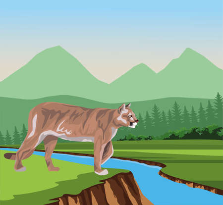 wild cougar in the jungle scene vector illustration design 矢量图像