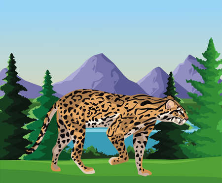 wild leopard in the landscape scene vector illustration design 矢量图像