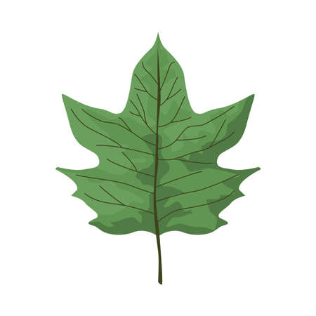 tropical leaf palm nature icon vector illustration design