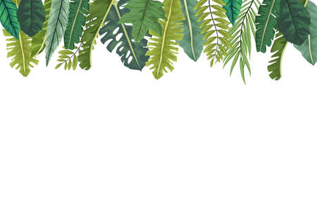 tropical leafs palm nature frame vector illustration design