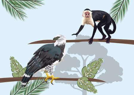 monkey and eagle animals wild in the jungle vector illustration design