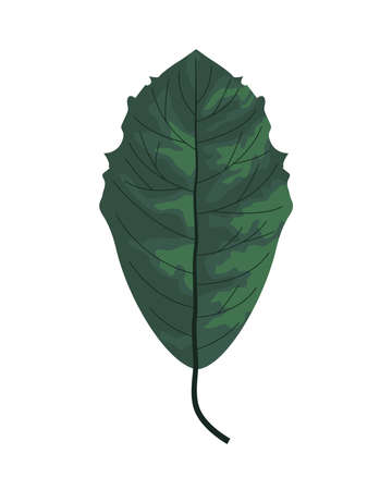 tropical leaf palm nature icon vector illustration design