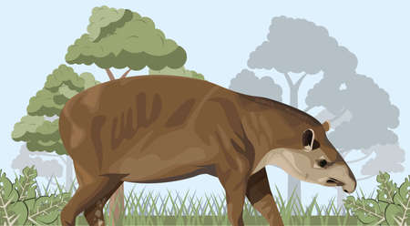 wild tapir animal in the camp landscape vector illustration design 일러스트