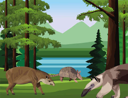 wild anteater with armadillo and tapir animals in the camp scene vector illustration design