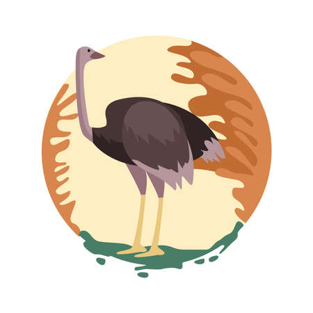 wild ostrich animal nature scene vector illustration design Vectores