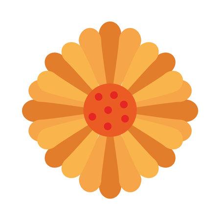 beautiful sunflower decoration garden icon vector illustration design