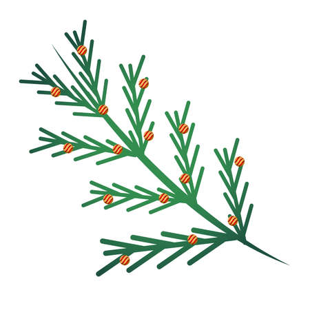 happy merry christmas pine tree branches with firs and balls vector illustration design Vectores