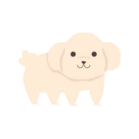 cute little dog french poodle character vector illustration design