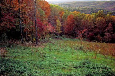 hillside: Buffalo River Hillside in Autumn