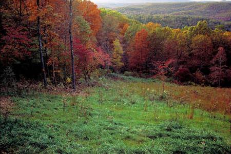 Buffalo River Hillside in Autumn