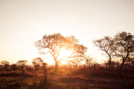 typical african landscape during sunset Stock Photo
