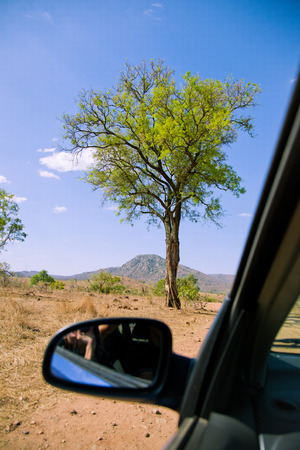 african scenery through the car window, african tree