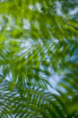 Tropical background leaves behind the sunny sky Stock Photo