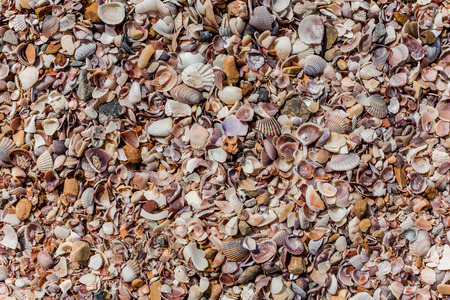 seashells on the beach, background, view from above