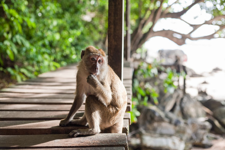 closeup of a monkey in natural habitat Stock Photo