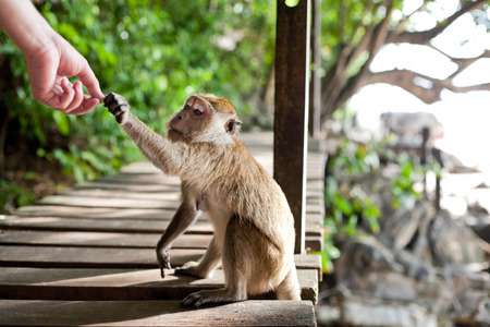 monkey taking food from humans hand