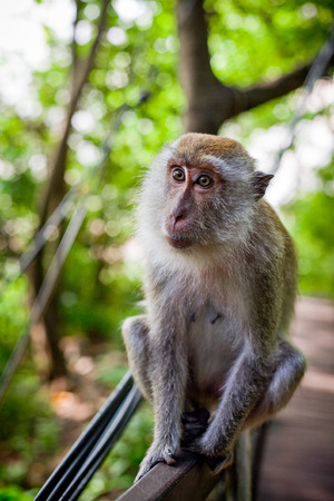 habitat: Monkey in natural habitat, vertical