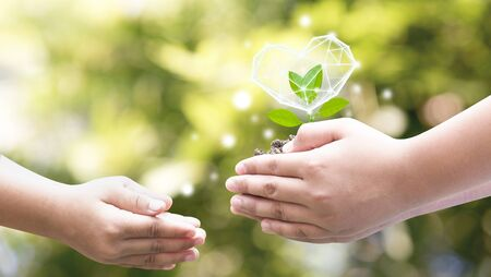 Hands planted seedlings is protected by the heart, loving the environment and protecting nature Nourishing the plants World Environment Day To help the world look beautiful.